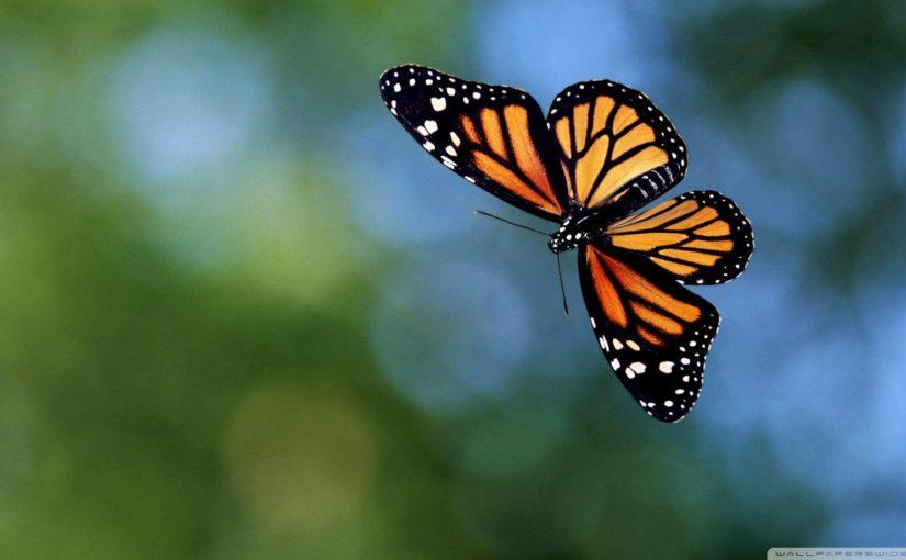 तितली की तरह